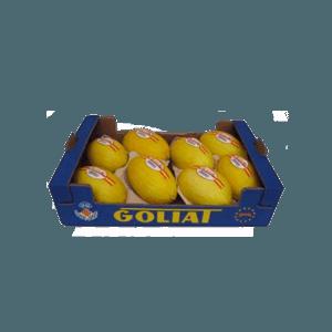xmelon-amarillo-1024x1024.png.pagespeed.ic.r24SJuyYOG